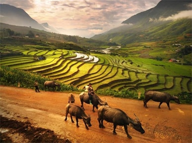 VIET NAM TRAVEL - WITH EASY INDOCHINA TRAVEL
