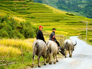 HOW TO SPEND 08 DAYS IN THE NORTH VIETNAM